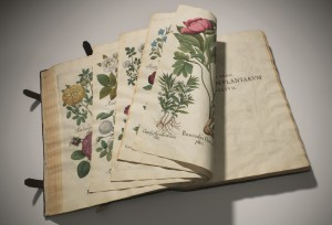 """Se licita el """"Florilegium"""" más valioso jamás publicado"""
