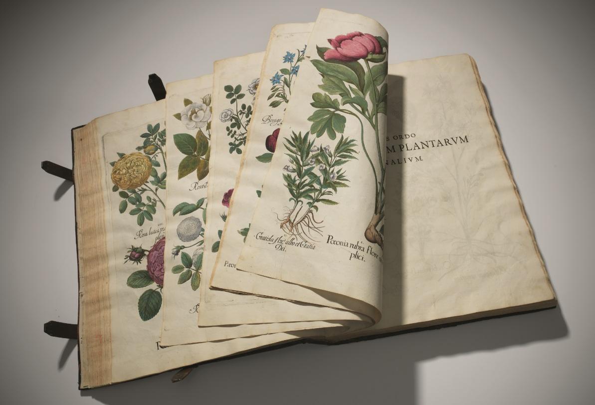 Christies Florilegium