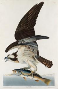 John James Audubon y la tribu de las plumas