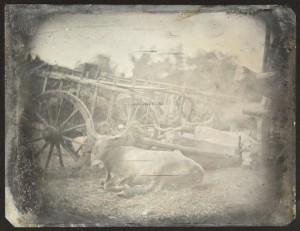 ¿La primera foto de un animal de la historia?