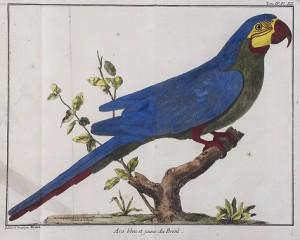 Canta, pájaro lejano – Toledo Art Museum, Ohio. Hasta el 25 de julio
